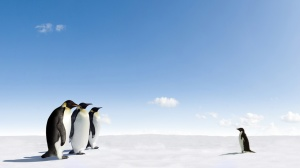 Emperor Penguins meeting Adelie Penguin in Antarctica